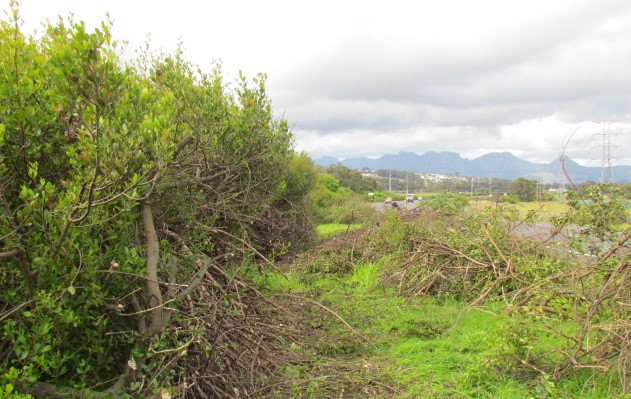 bush clearing